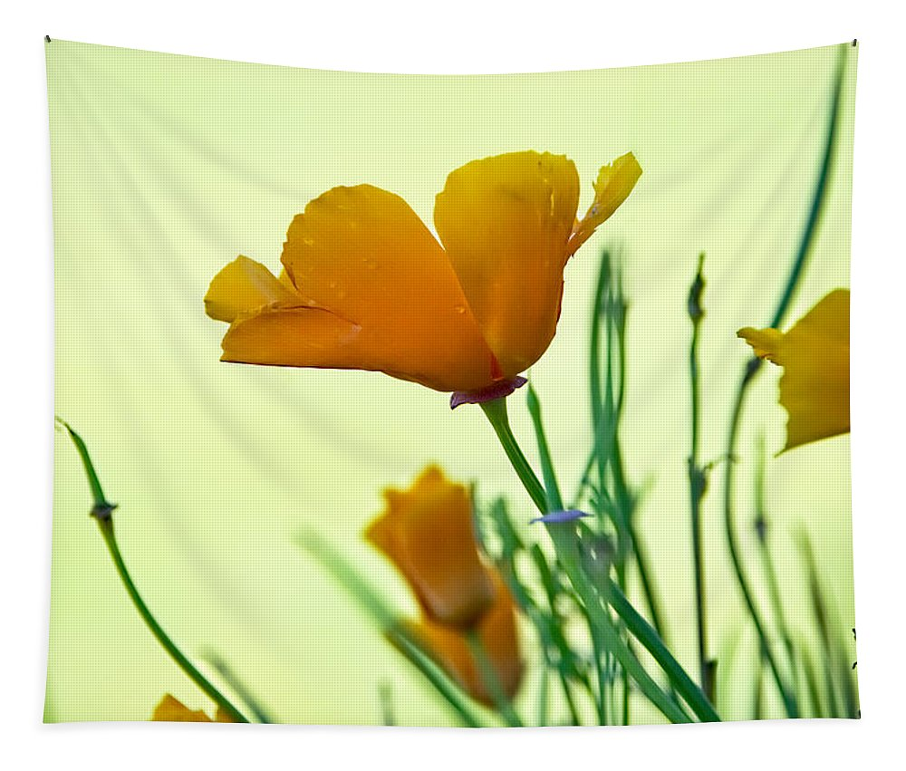 Eschscholzia Tapestry featuring the photograph California Poppies by Susie Peek