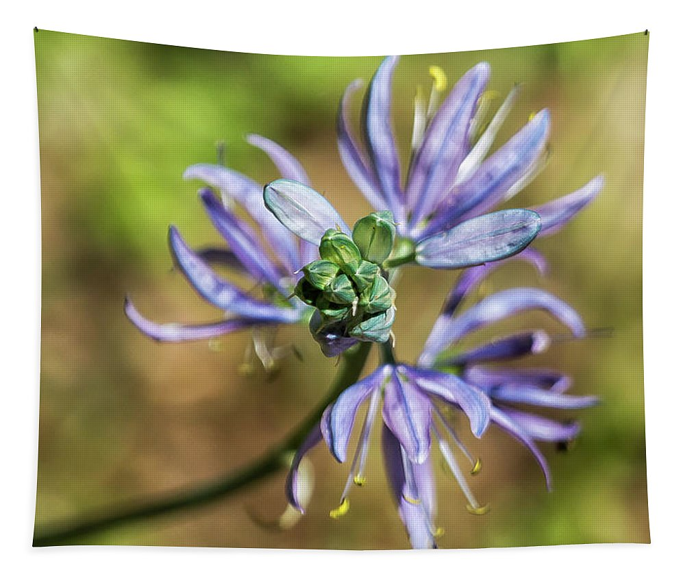 Camassia Tapestry featuring the photograph Camas Bud To Bloom by Belinda Greb