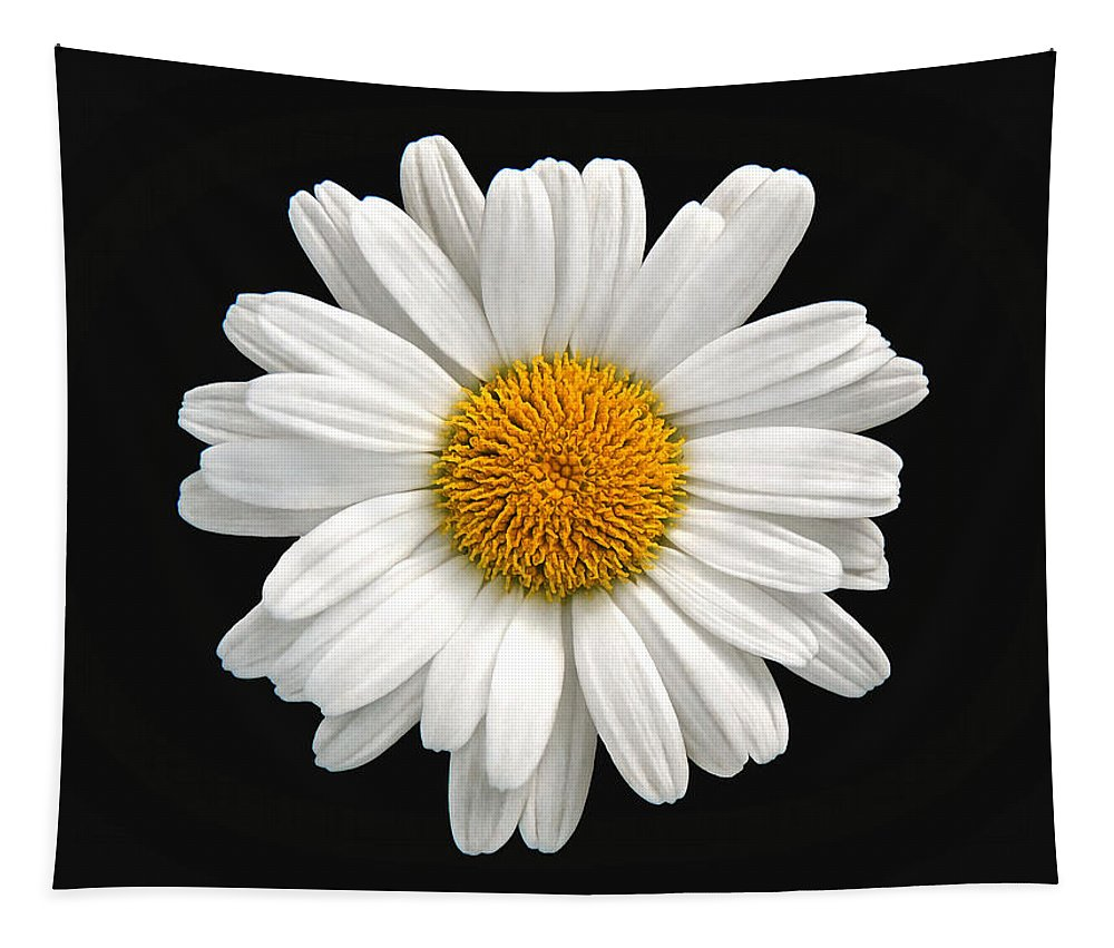 Camomile Tapestry featuring the photograph Camomile by Sergey Lukashin