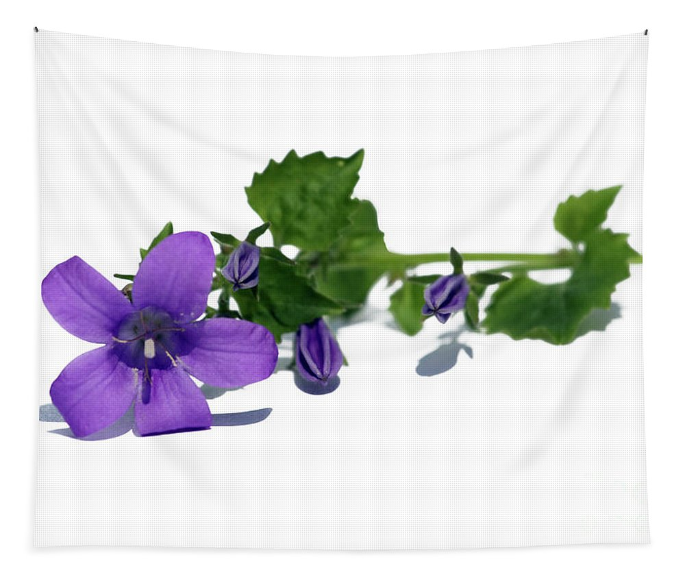 Campanula Tapestry featuring the photograph Campanula by Terri Waters