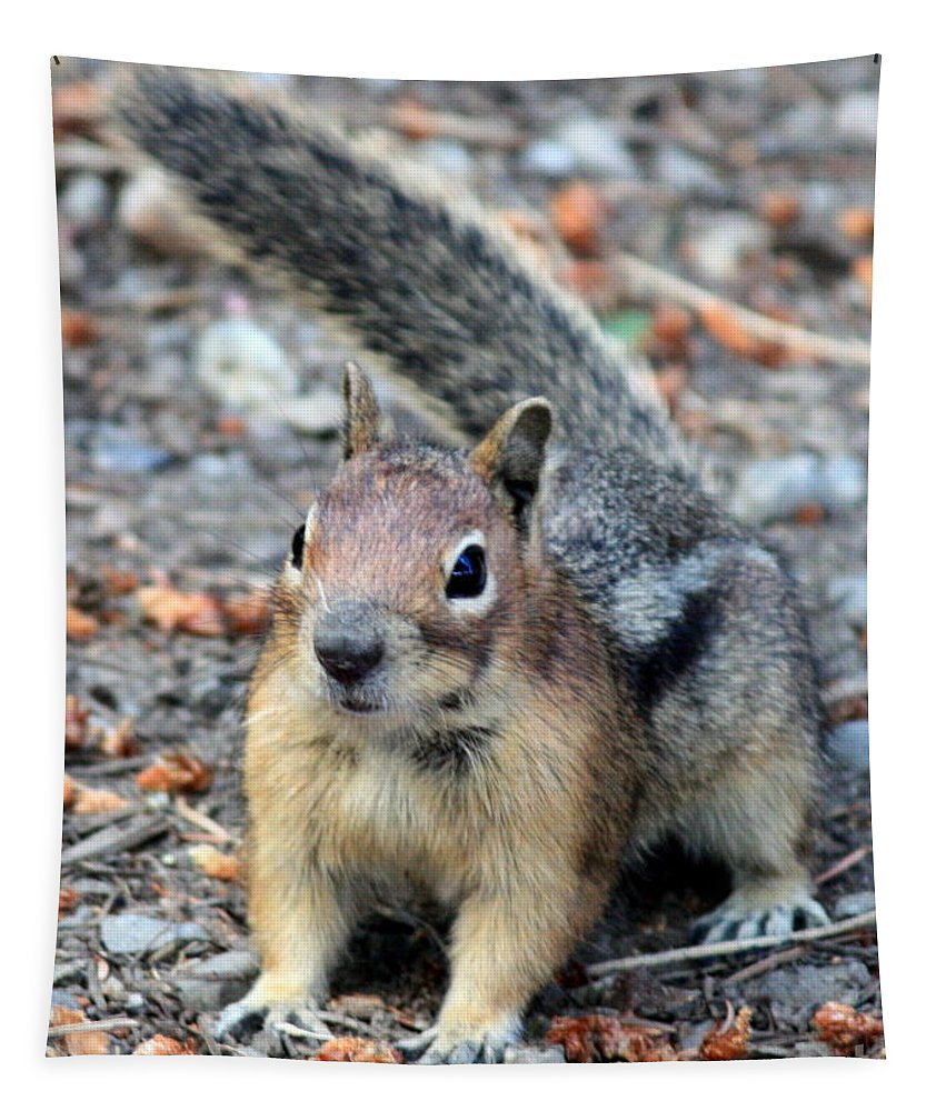 Chipmunk Tapestry featuring the photograph Campground Chipmunk by Carol Groenen