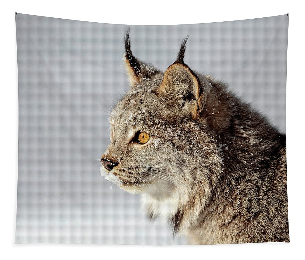 Canada Lynx Up Close Tapestry featuring the photograph Canada Lynx Up Close by Wes and Dotty Weber