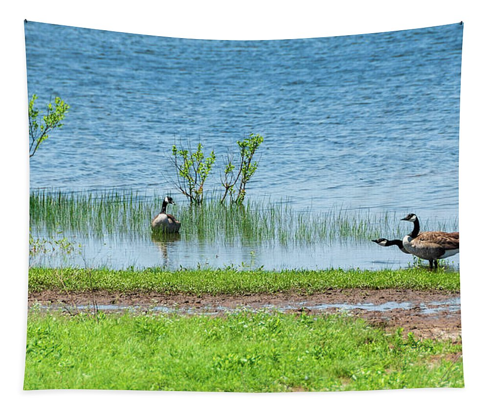 Canadian Geese Tapestry featuring the photograph Canadian Geese - Wichita Mountains - Oklahoma by Debra Martz