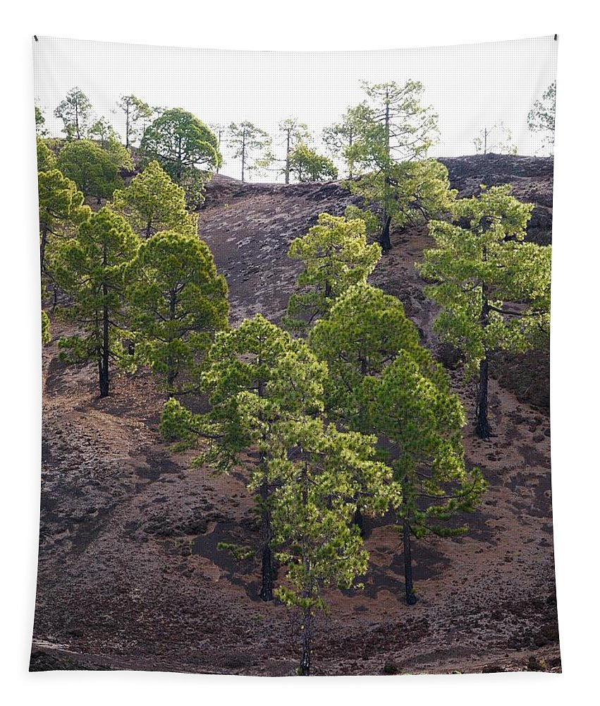Landscape Tapestry featuring the photograph Canary Pines Nr 2 by Jouko Lehto