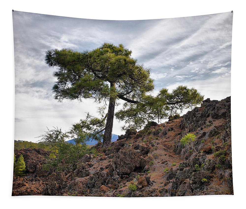 Landscape Tapestry featuring the photograph Canary Pines Nr1 by Jouko Lehto