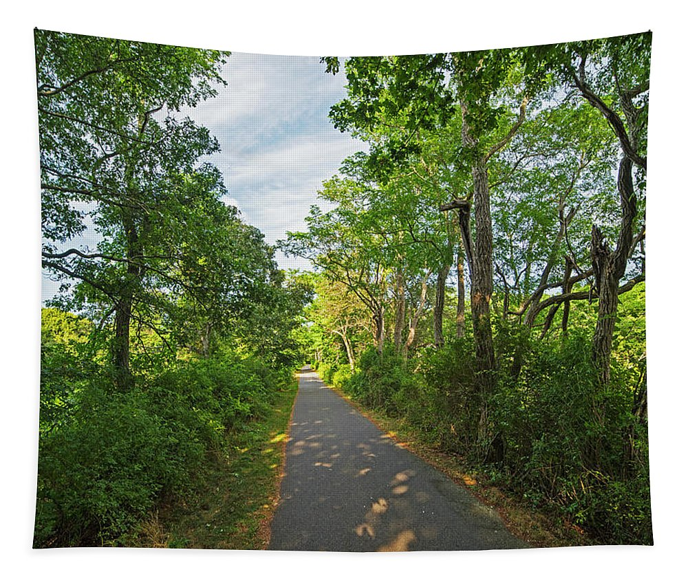 Cape Tapestry featuring the photograph Cape Cod Rail Trail Trees Eastham Ma 2 by Toby McGuire