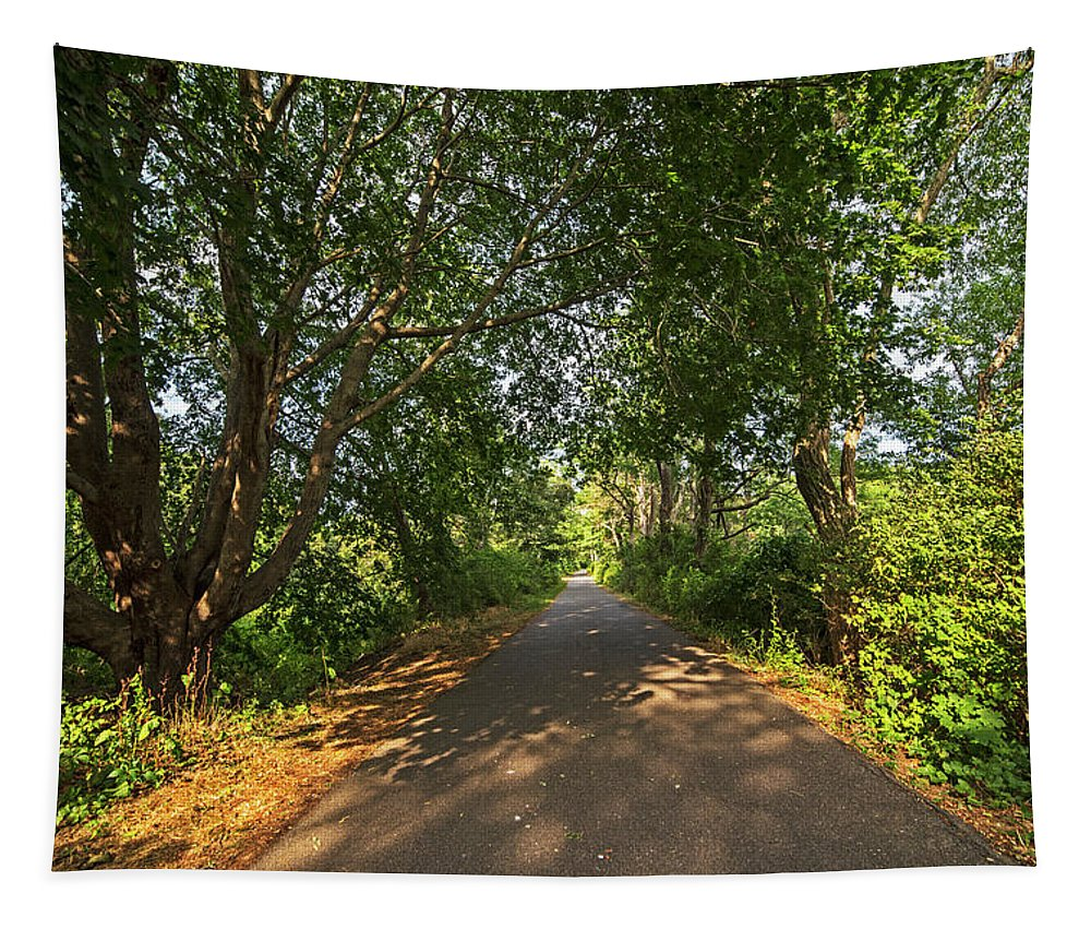 Cape Tapestry featuring the photograph Cape Cod Rail Trail Trees Eastham Ma by Toby McGuire