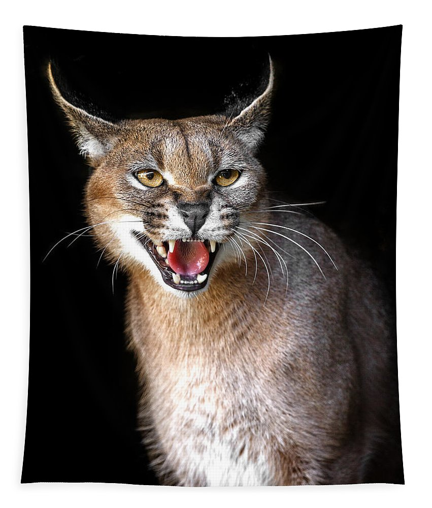 Caracal Hissy Fit Tapestry featuring the photograph Caracal Hissy Fit by Wes and Dotty Weber
