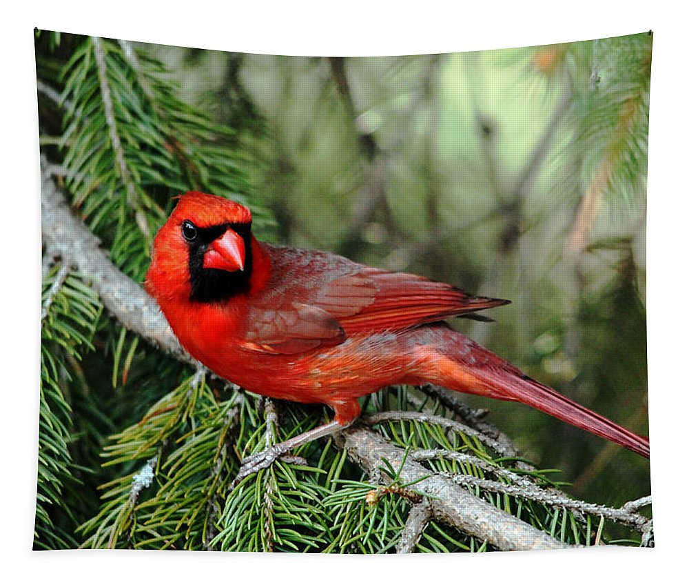 Cardinal Tapestry featuring the photograph Cardinal Attitude by Debbie Oppermann
