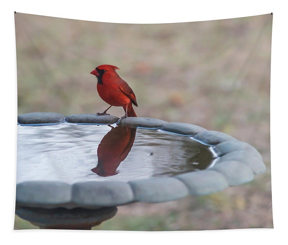 Terry Deluco Tapestry featuring the photograph Cardinal Reflection by Terry DeLuco