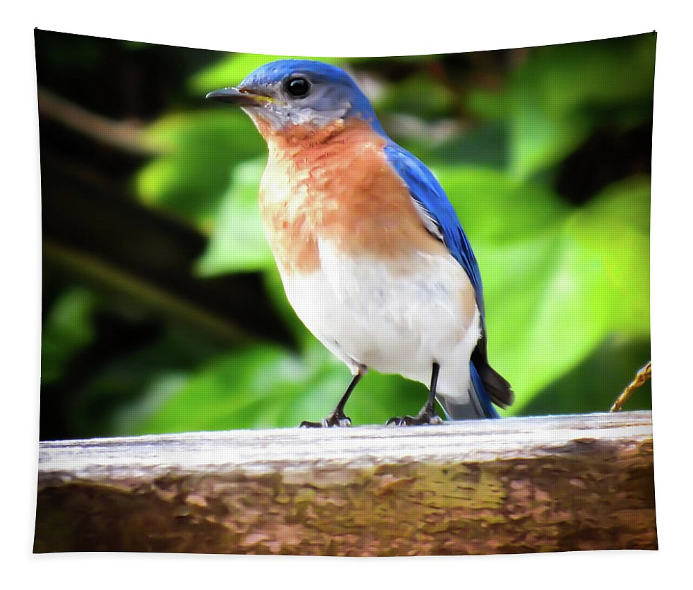 Carolina Bluebirds Tapestry featuring the photograph Carolina Bluebird Male by Karen Wiles