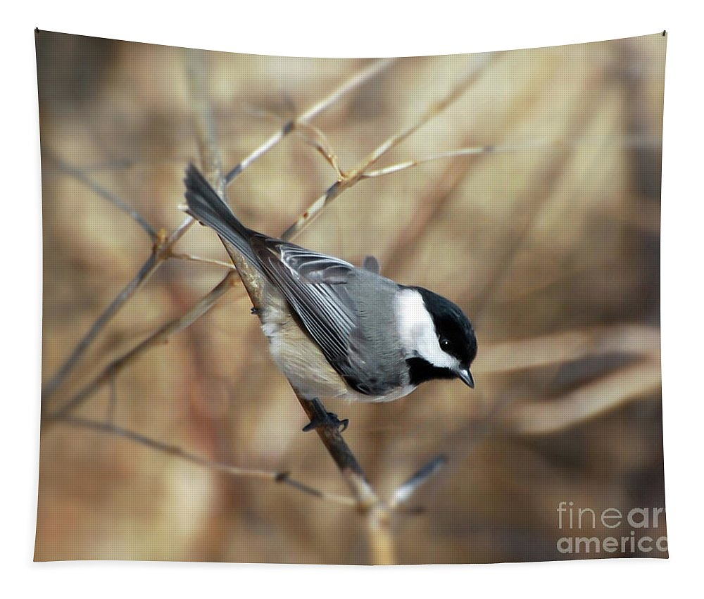 Birds Tapestry featuring the photograph Carolina Chickadee - Birds At Bisset Park by Kerri Farley