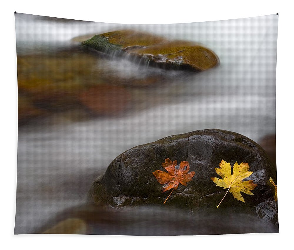 Leaves Tapestry featuring the photograph Castaways by Mike Dawson