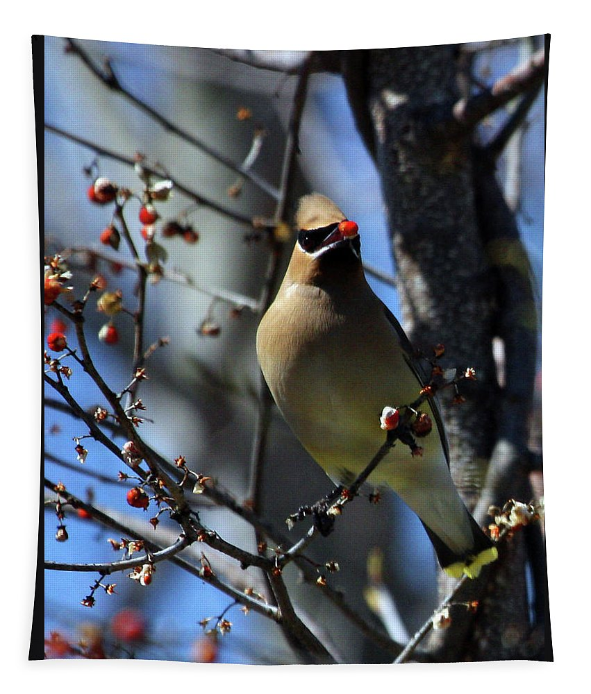 Bird Tapestry featuring the photograph Cedar Waxwing by Karol Livote