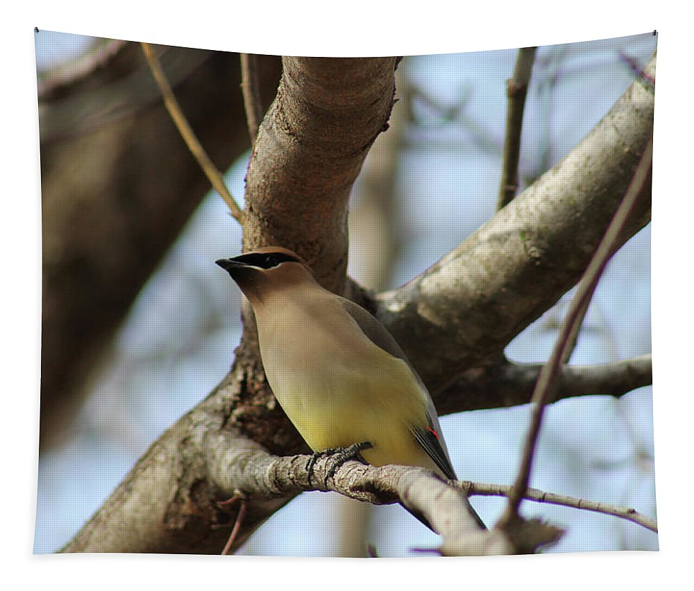 Cedar Waxwing Tapestry featuring the photograph Cedar Waxwing by Michael Munster