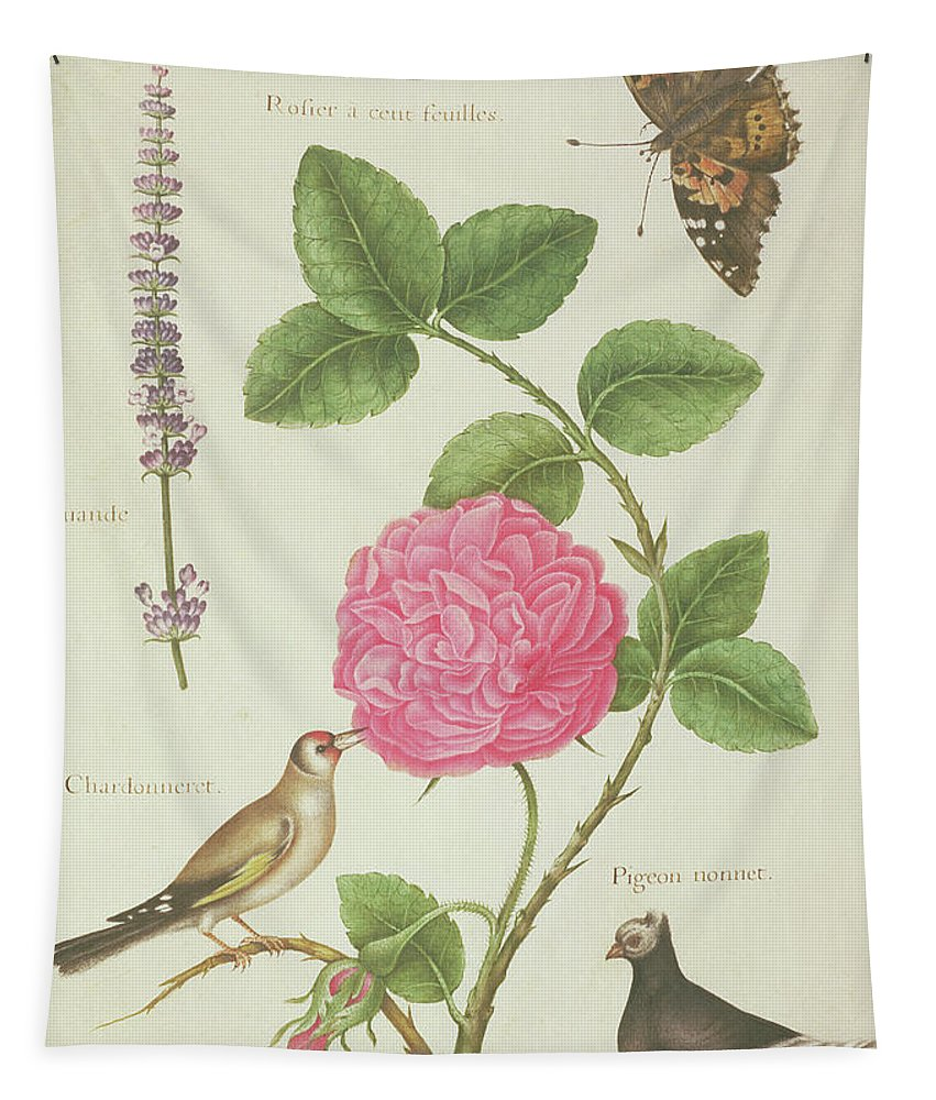 Butterfly Tapestry featuring the painting Centifolia Rose, Lavender, Tortoiseshell Butterfly, Goldfinch And Crested Pigeon by Nicolas Robert