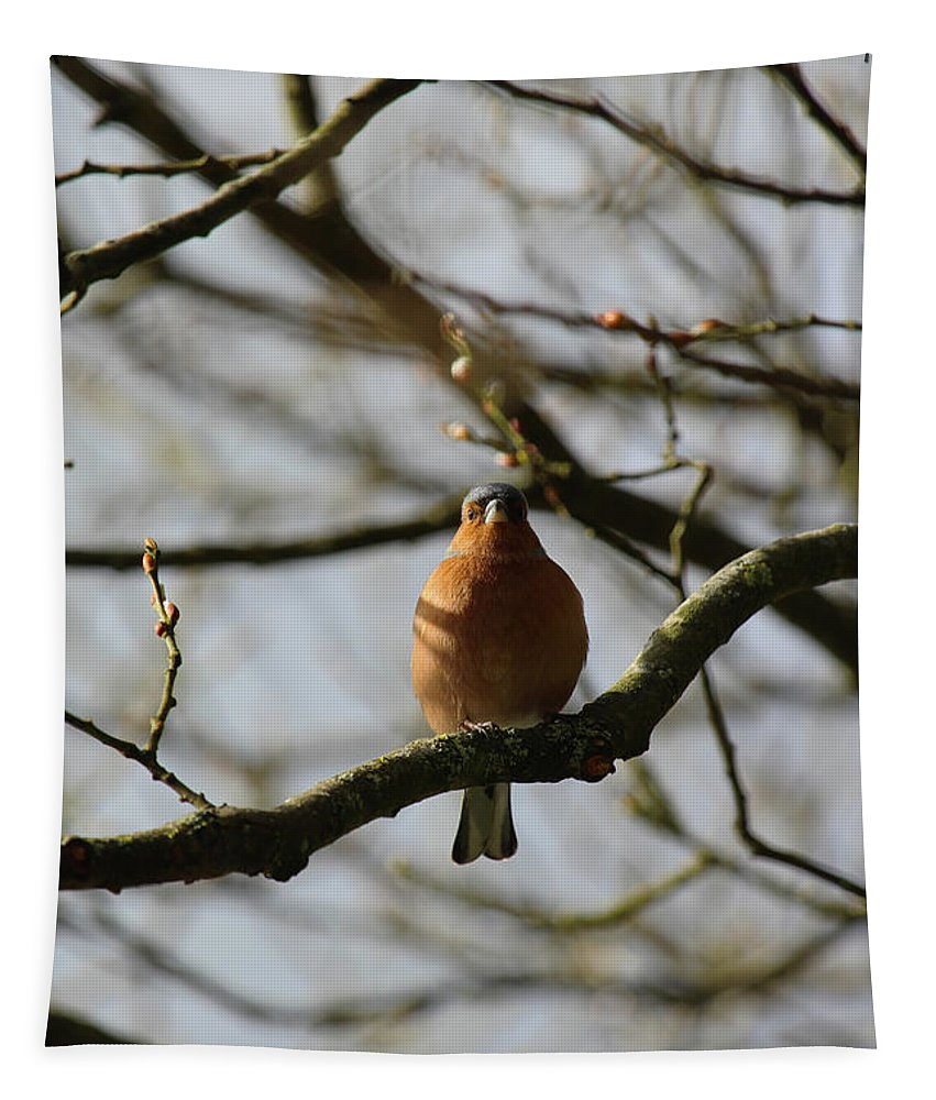 Bird Tapestry featuring the photograph Chaffinch by Eddie Barron