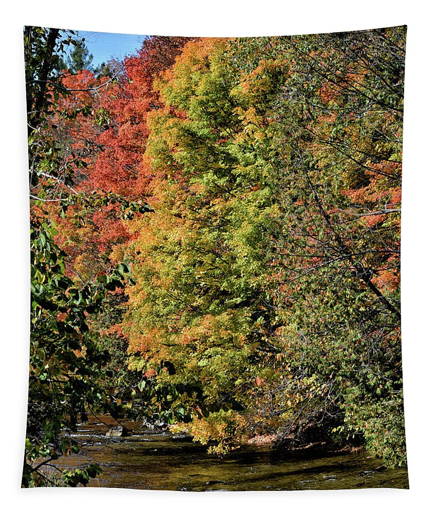Forks Of The Credit Tapestry featuring the photograph Changing Colours Of The Fall by Maria Keady