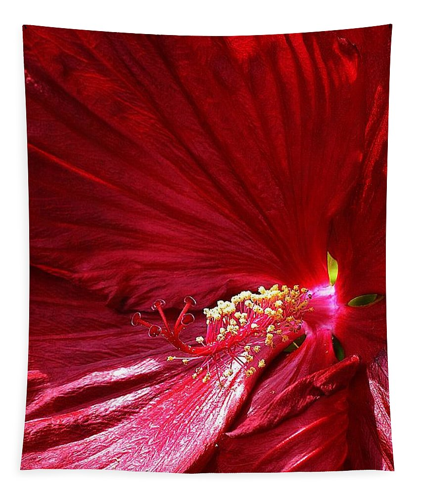 Day Tapestry featuring the photograph Charlotte Beach Red Hibiscus by Carol J Deltoro
