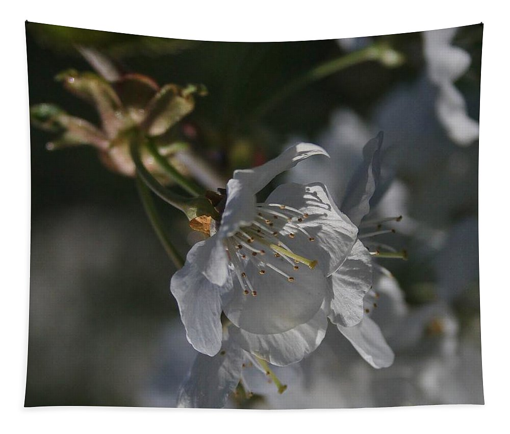 Cherry Tapestry featuring the photograph Cherry Blossom 5 by Mo Barton