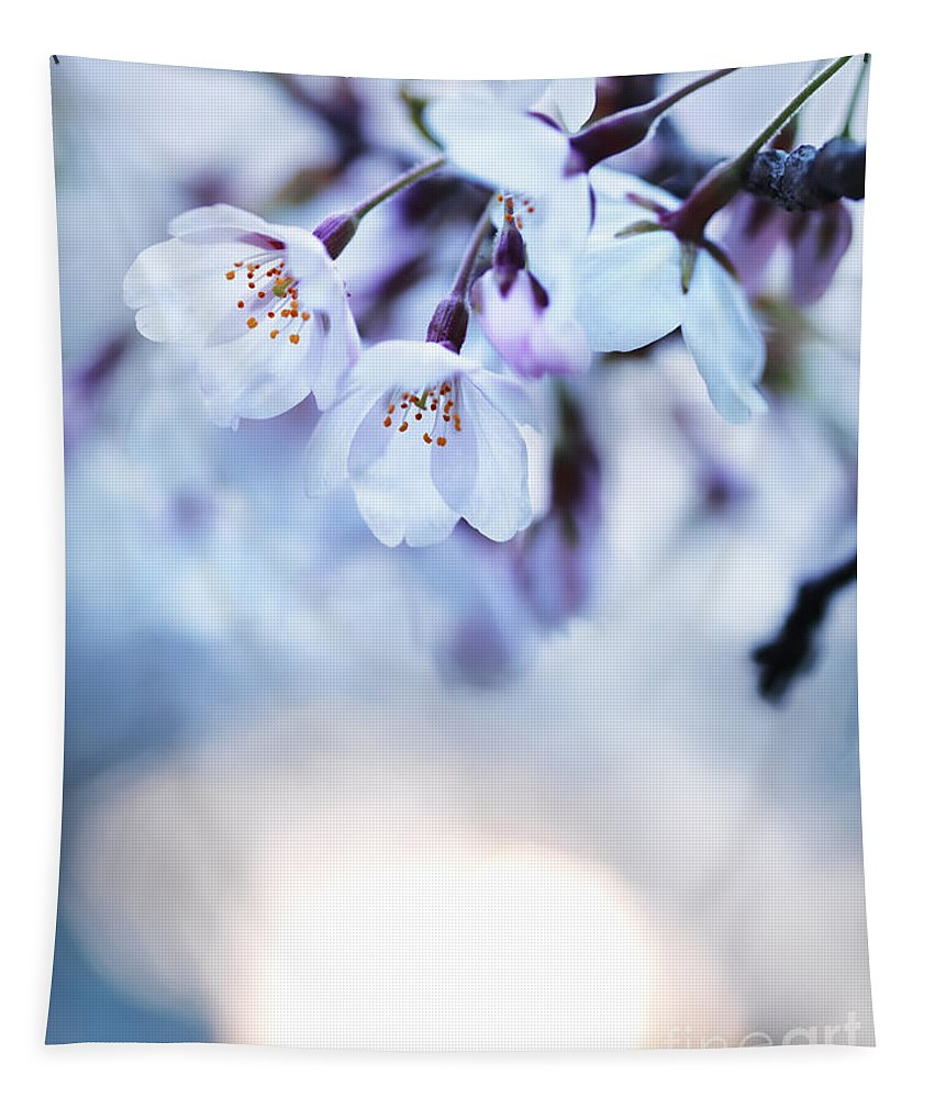 Blossom Tapestry featuring the photograph Cherry Tree Blossoms In Morning Sunlight by Oleksiy Maksymenko