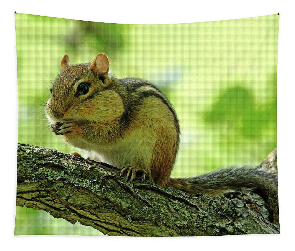 Chipmunk Tapestry featuring the photograph Chipmunk Cheeks by Debbie Oppermann