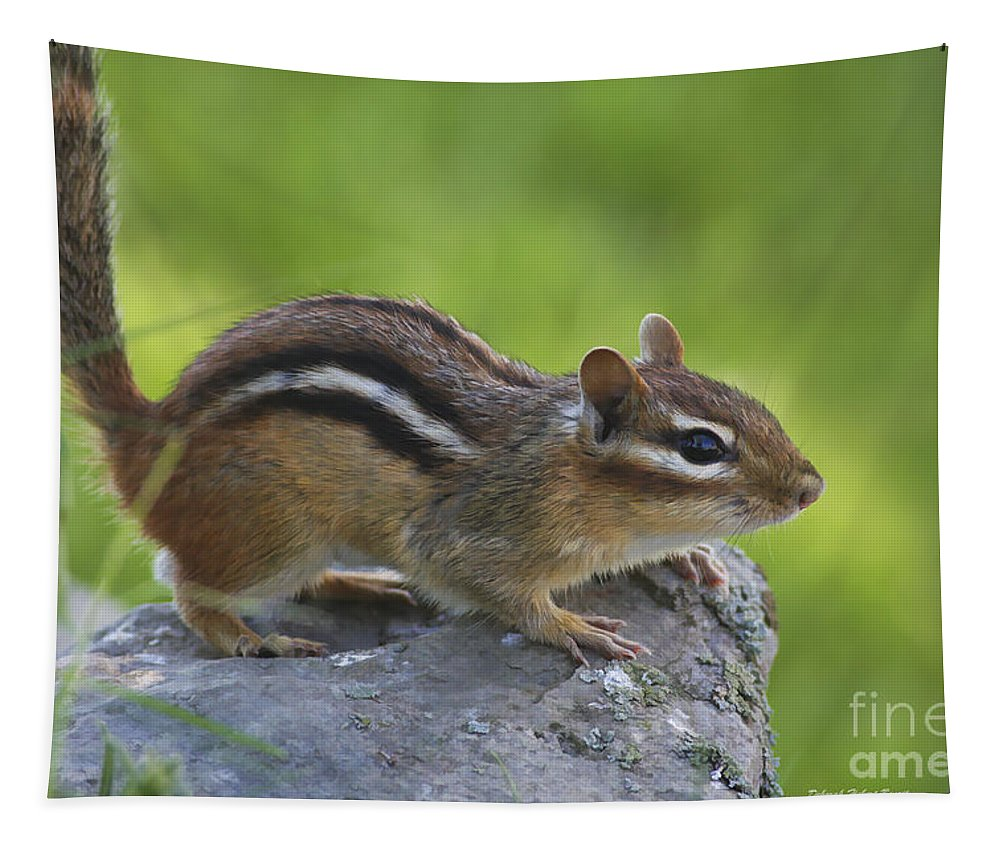 Nature Tapestry featuring the photograph Chippy On The Move by Deborah Benoit