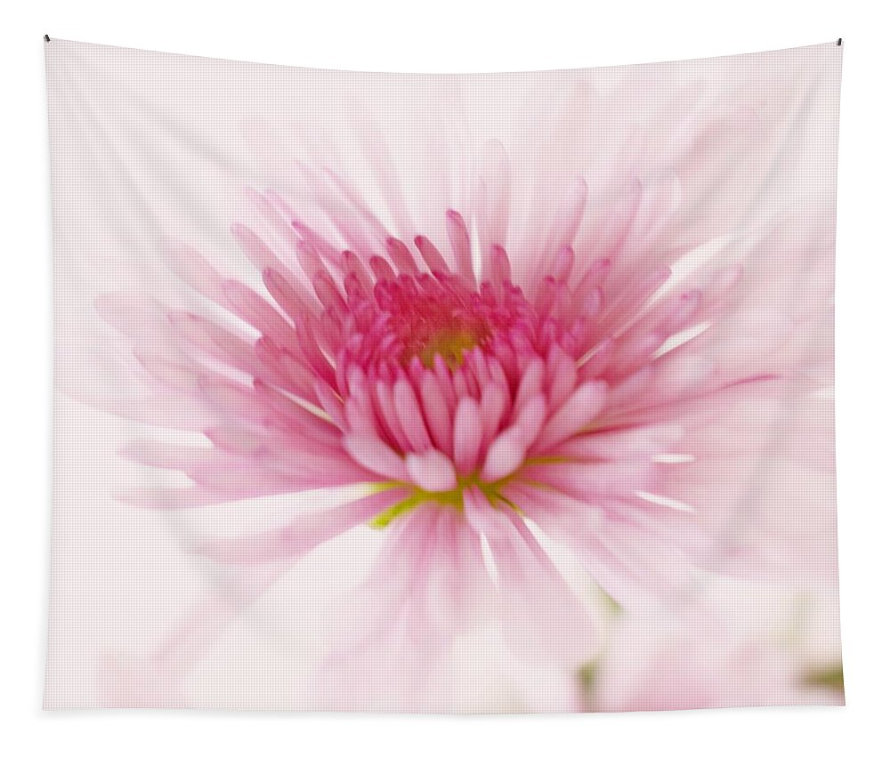 Chrysanthemum Tapestry featuring the photograph Chrysanthemum #004 by Ninie AG