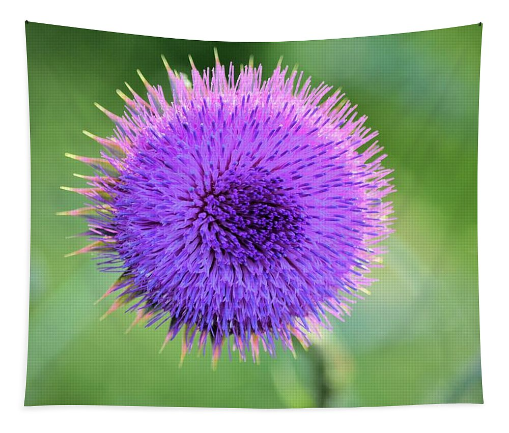 Thistle Tapestry featuring the photograph Cirsium by Bonfire Photography