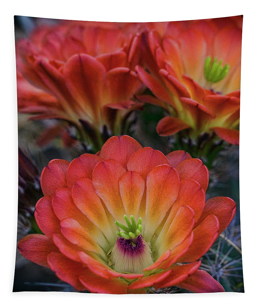 Claret Cup Cactus Tapestry featuring the photograph Claret Cup Cactus Flowers by Saija Lehtonen