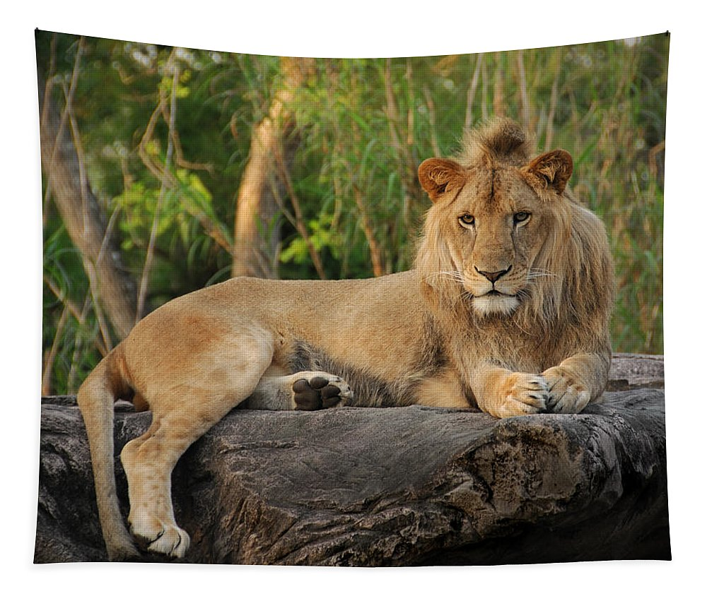 Lion Tapestry featuring the photograph Classic Young Male by Steven Sparks