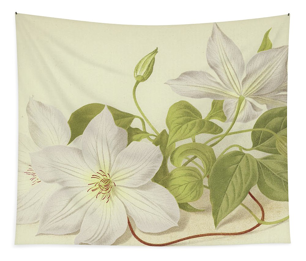 Clematis Tapestry featuring the painting Clematis Jackmanni Alba by English School