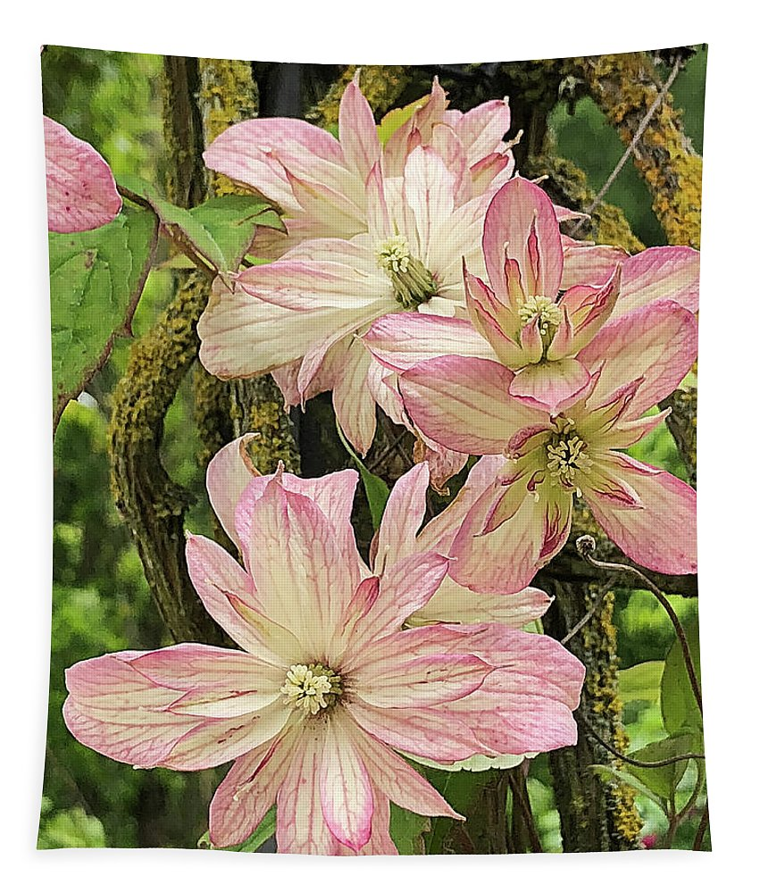 Alnwick Gardens Tapestry featuring the photograph Clematis Montana Marjorie 1060 by Teresa Wilson