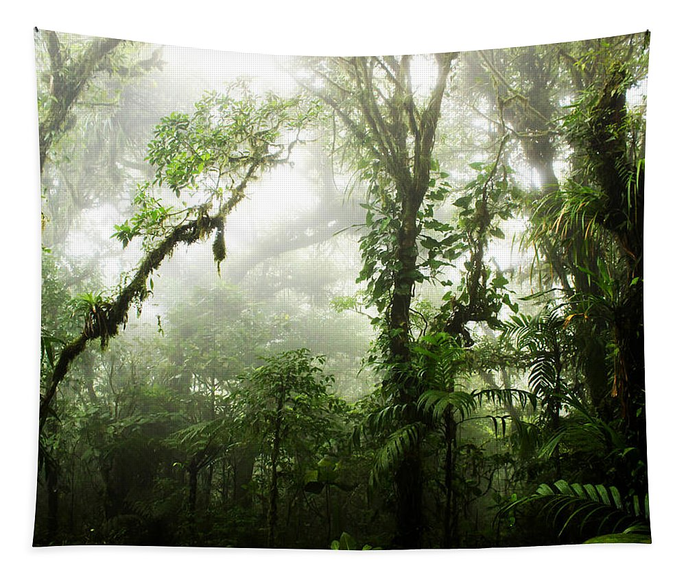 Forest Tapestry featuring the photograph Cloud Forest by Nicklas Gustafsson