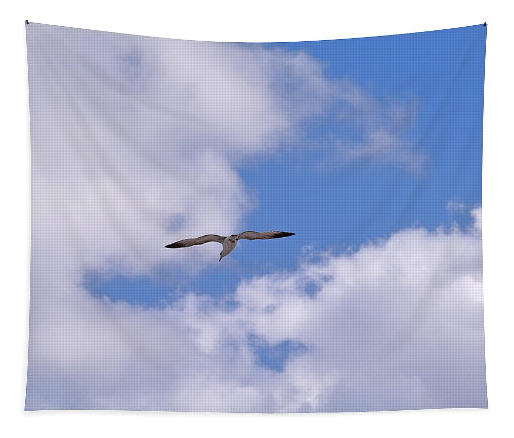 Sea Bird Tapestry featuring the photograph Cloudy Skies by Maria Keady