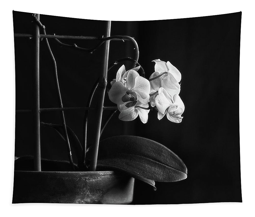 Orchids Tapestry featuring the photograph Clustered In A Corner by Susan Capuano