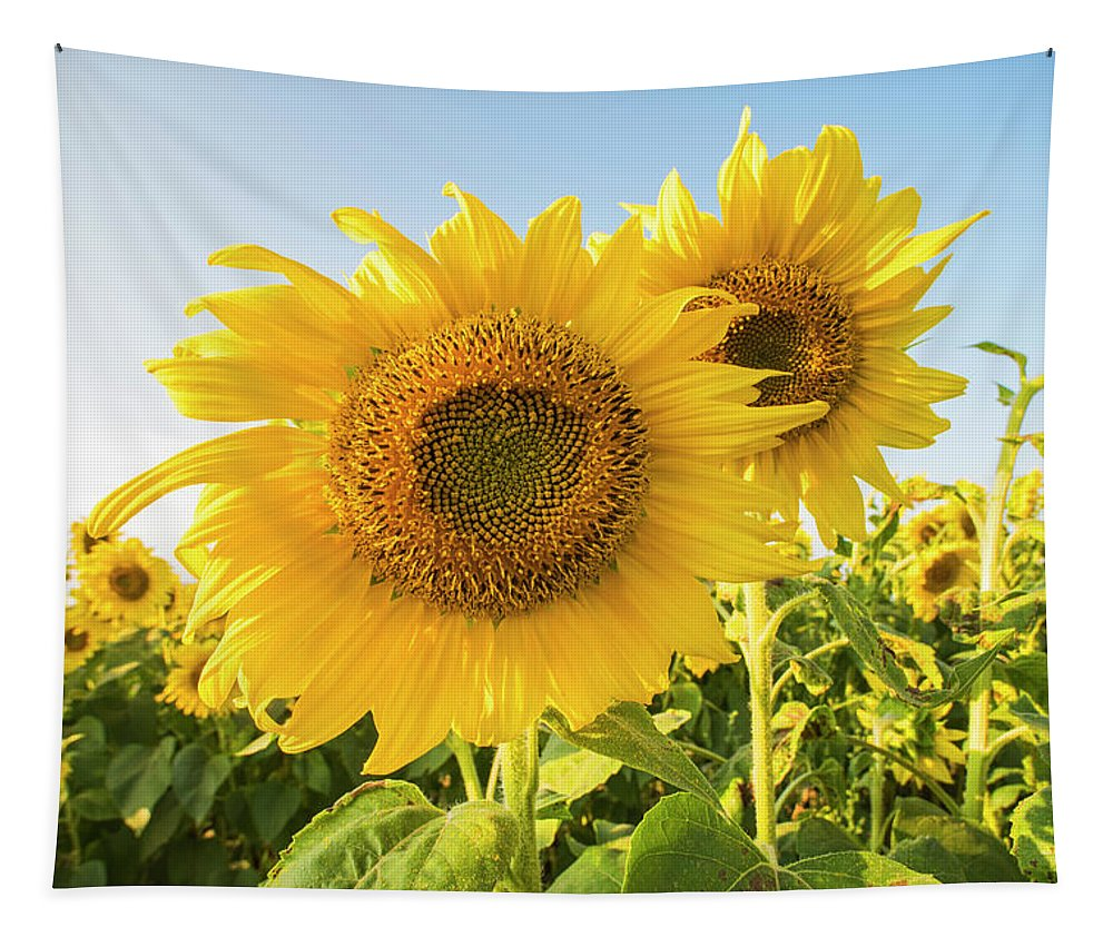 Colby Tapestry featuring the photograph Colby Farms Sunflower Field Closeup by Toby McGuire