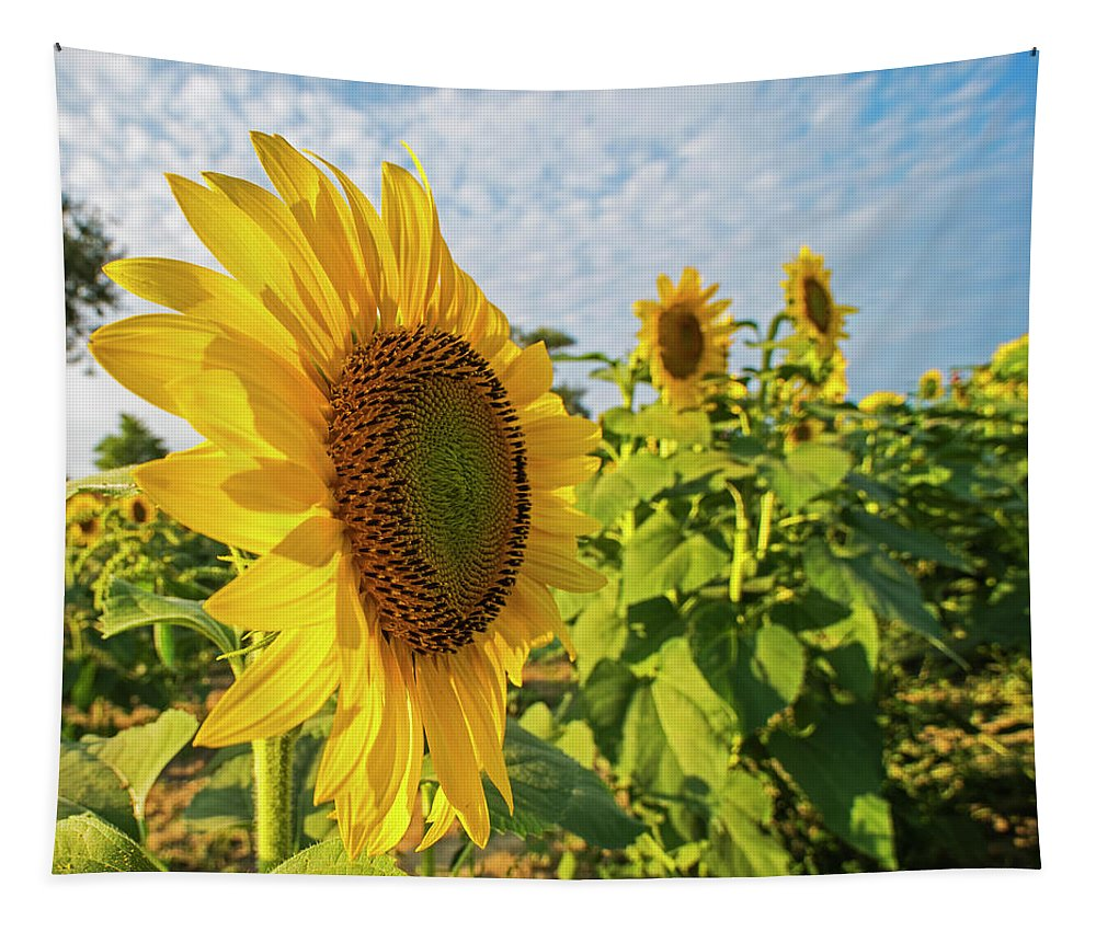 Colby Tapestry featuring the photograph Colby Farms Sunflower Field Side by Toby McGuire
