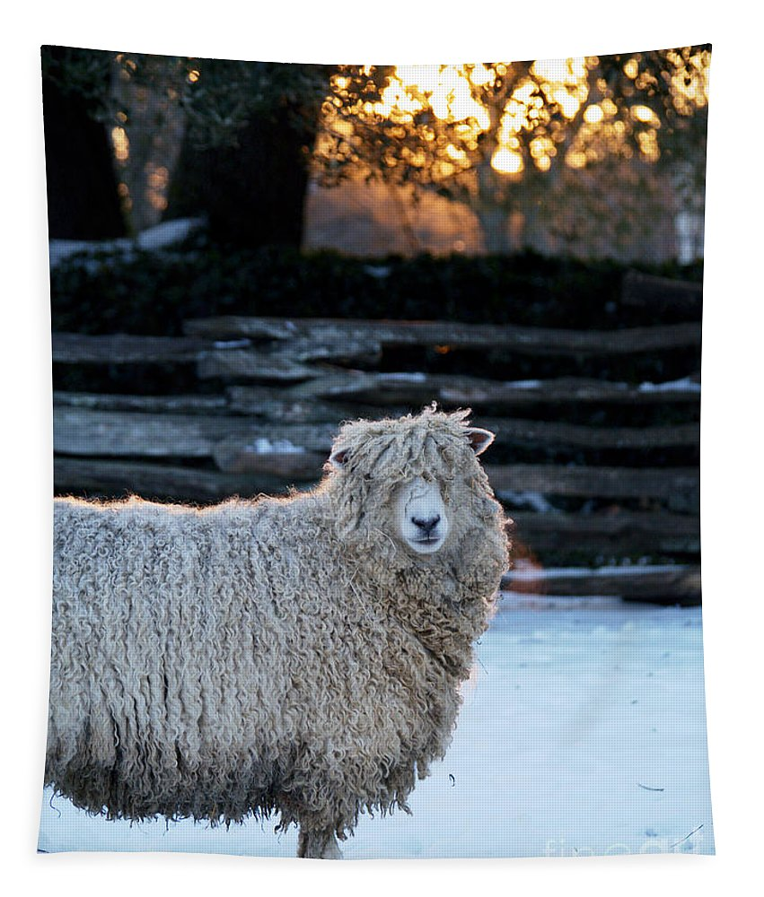 Sheep Tapestry featuring the photograph Colonial Sheep In Winter by Rachel Morrison