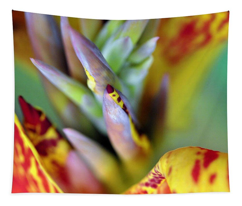 Flower Tapestry featuring the photograph Color Burst by Stephen Anderson
