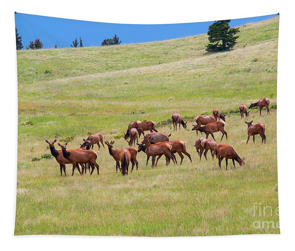 Elk Tapestry featuring the photograph Colorado Elk Herd by Steve Krull