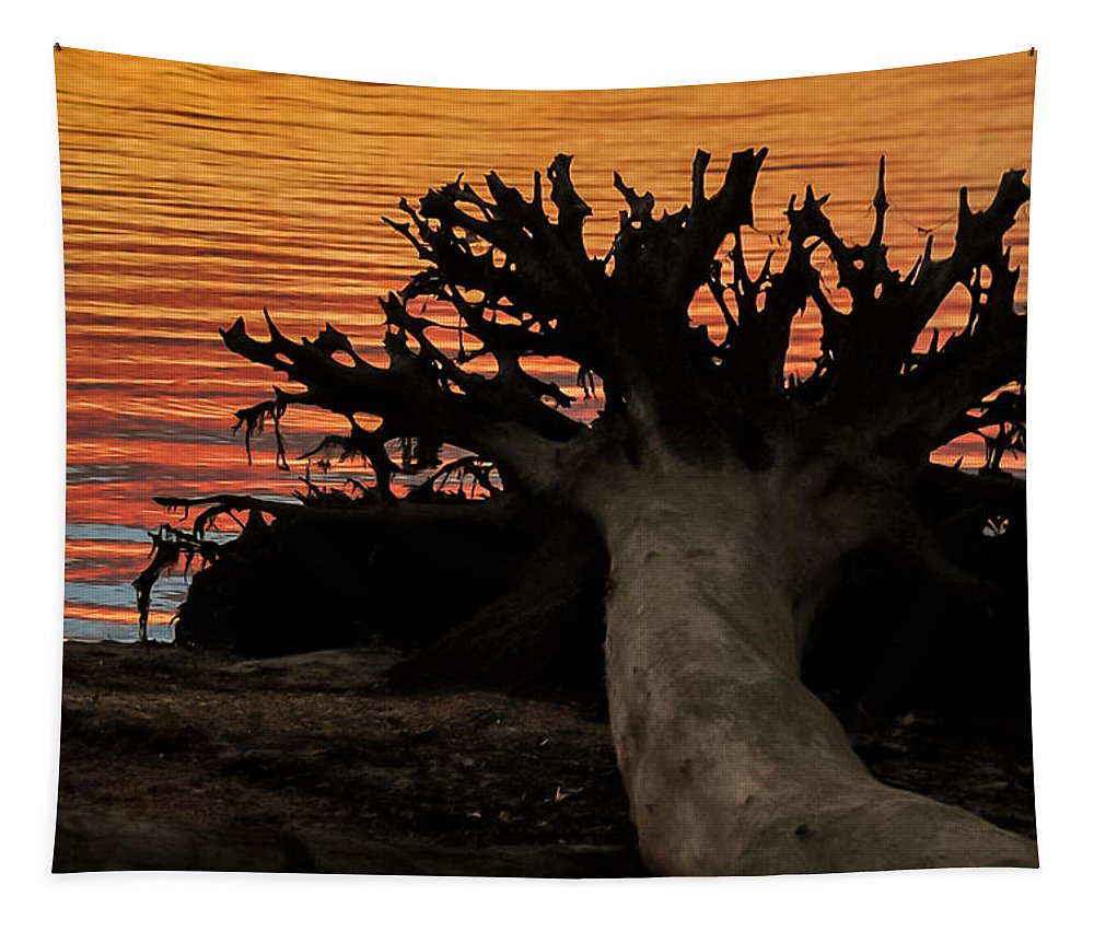 Terry D Photography Tapestry featuring the photograph Colorful Roots by Terry DeLuco