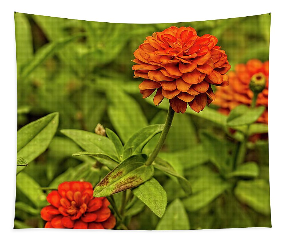 Flowers Tapestry featuring the photograph Colorful Summer Flowers by Kay Brewer