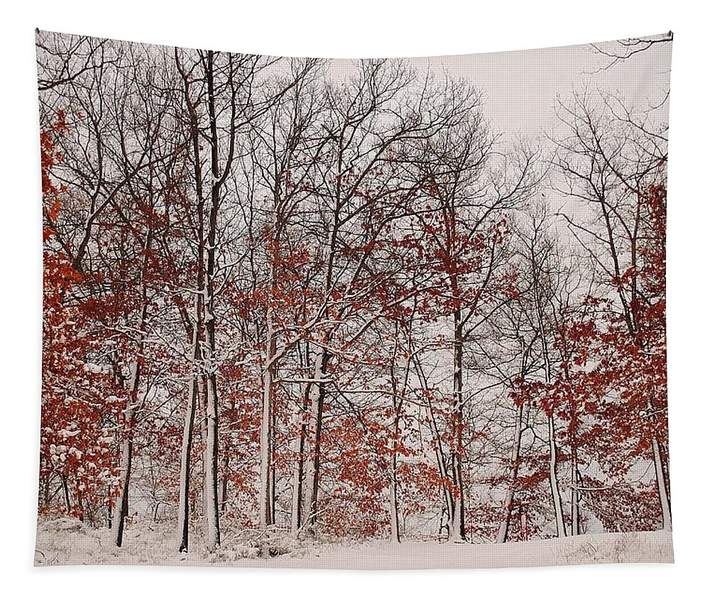 Winter Tapestry featuring the photograph Colorful Winters Day by Frozen in Time Fine Art Photography