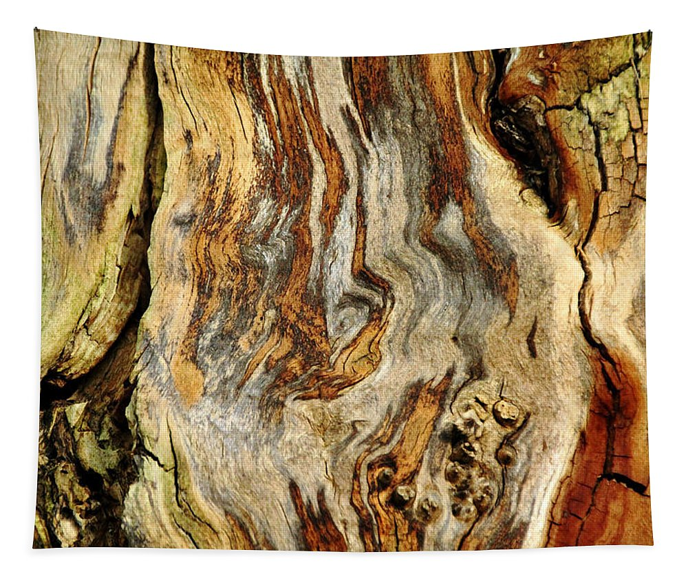 Bark Abstract Tapestry featuring the photograph Colors Of Bark by Debbie Oppermann