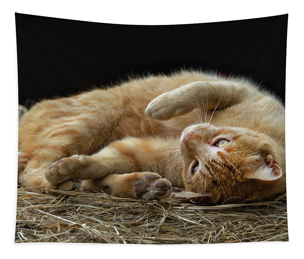 Cat Tapestry featuring the photograph Comfy Cat by Eleanor Bortnick