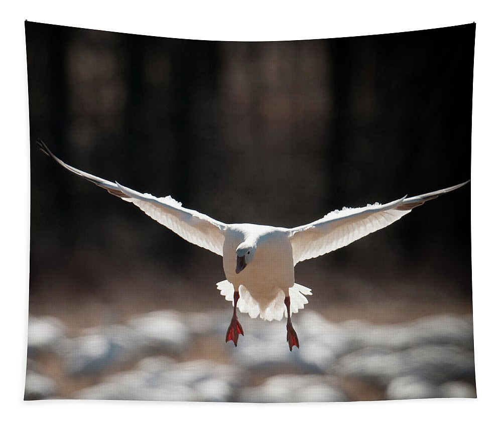 Ducks Tapestry featuring the photograph Coming Down by Craig Leaper