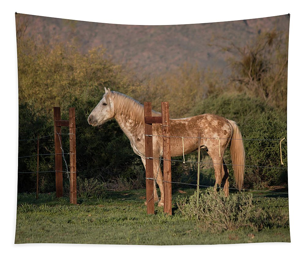 Horses Tapestry featuring the photograph Coming Through The Fence by Teresa Wilson