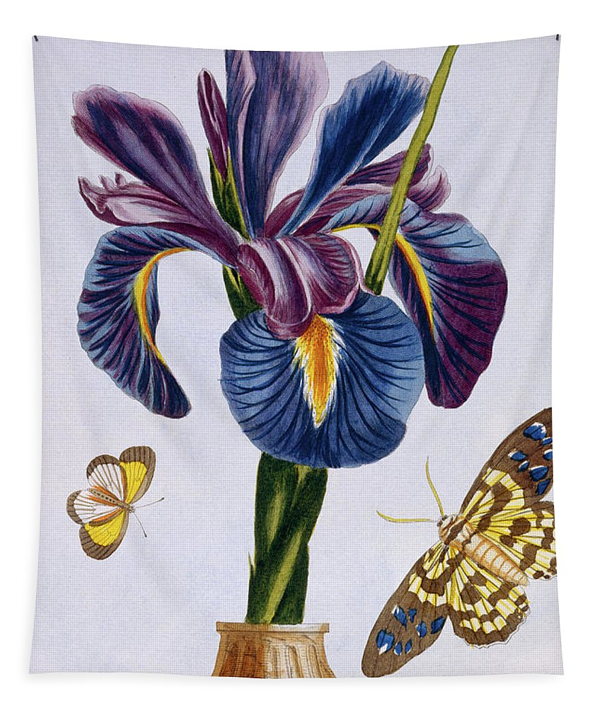 Iris Tapestry featuring the painting Common Iris With Butterflies by Pierre-Joseph Buchoz