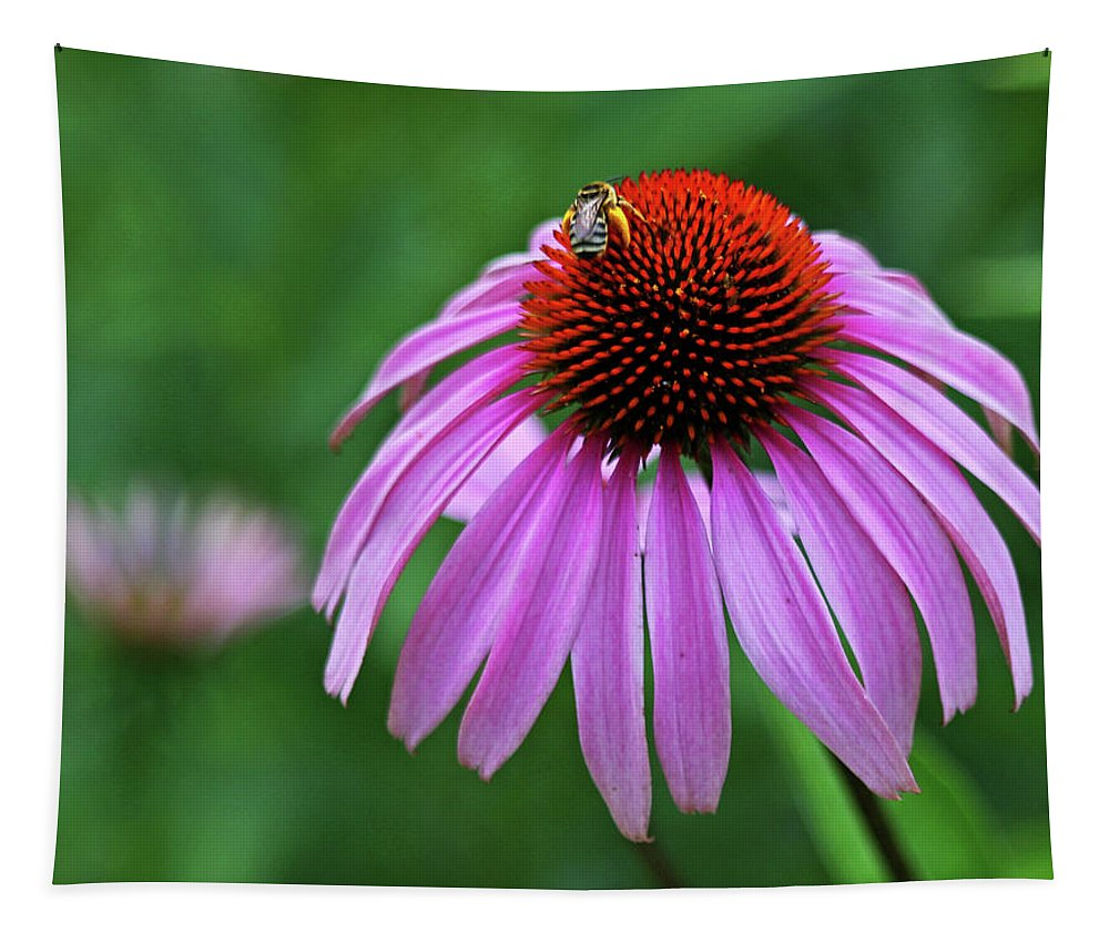 Coneflower Tapestry featuring the photograph Coneflower by Judy Vincent